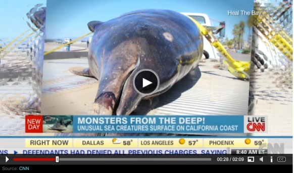 Another_rare__sea_monster__lands_in_California__a_saber-toothed_whale_-_CNN.com 2